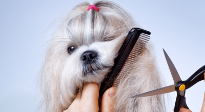 mejor peluqueria canina de arteixo