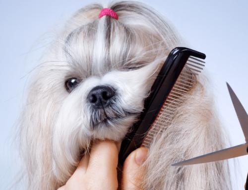 É bo cortarlle o pelo ó can en verán?