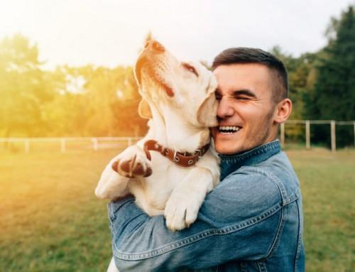 Agasallos para cans de aniversarios orixinais
