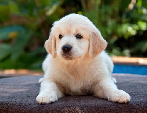 Por tranquilidade e saúde, elixe a perrucaría canina en Arteixo 'Hocicalados'