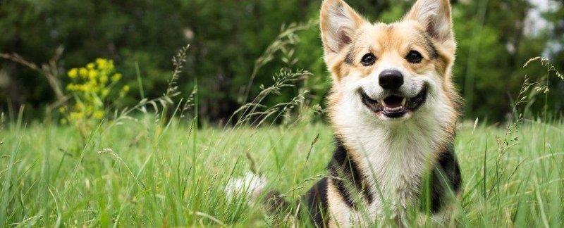 regalos originales para perros